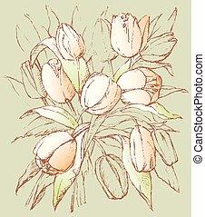mazzolino, tulips, schizzo