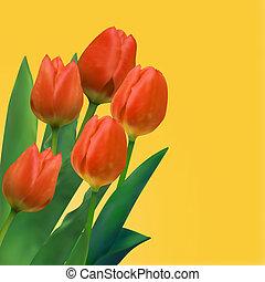 mazzolino, tulips.