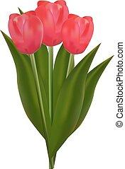 mazzolino, vettore, illustrazione, tulips, rosso