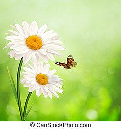 meadow., été, résumé, arrière-plans, pâquerette, fleurs, heureux