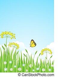 meadow., 夏