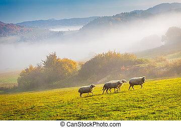 meadow., 牧草, sheep, 群れ