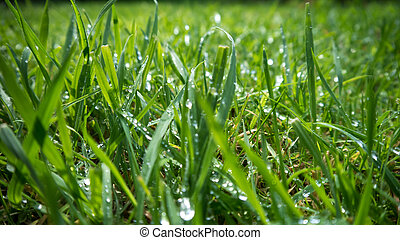 meadow after rain
