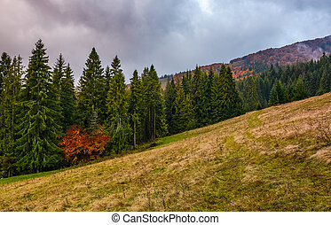 meadow among the forest on cloudy autumn day - weathered...
