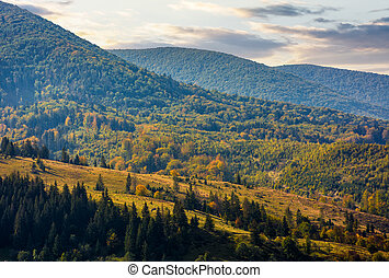 meadow among the forest on hillside at autumn morning....