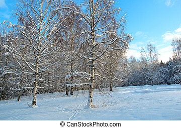 Meadow and forest on a sunny winter day