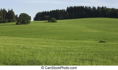 Meadow and forests. Rural summer landscape with green meadow and forest