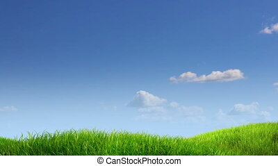 meadow and sky background