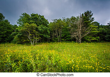 Meadow and trees on Skyline Drive in Shenandoah National...
