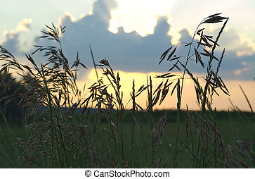 meadow at sunset obn