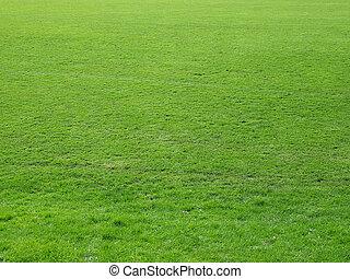 Meadow background - Green grass meadow lawn useful as...