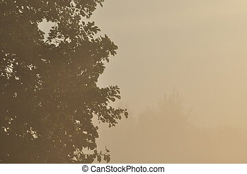 meadow., drzewa, rano, zmienny, swit, fog., rosa, weather.