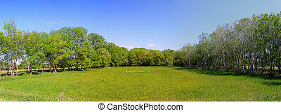 Empty green meadow field surrounded with forest