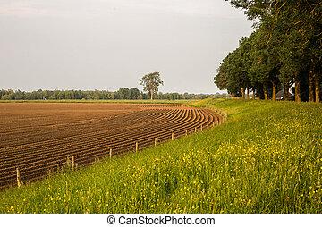 Meadow Farm golden morning Netherlands
