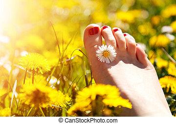 meadow., femme, printemps, ensoleillé, jeune, doigts, fleur, pied, mensonge