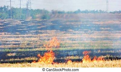 Meadow fire, huge field. Burnt grass in the field and fire...