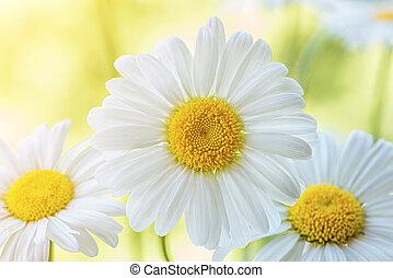 meadow., fleurs