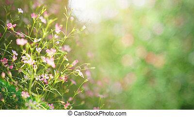 meadow flower background.
