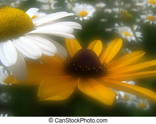 Meadow Flowers - Black-eyed Susan and Daisy
