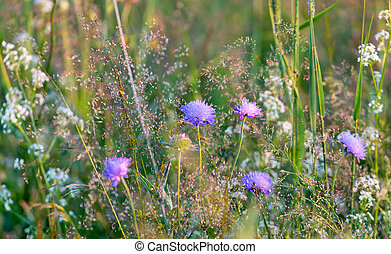 meadow flowers in Sunny day