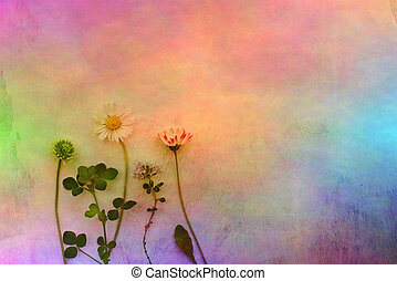 Meadow flowers on rainbow color background