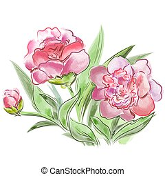 Meadow flowers peonies  isolated on  white background