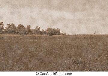 meadow., foto, stile, vecchio, immagine
