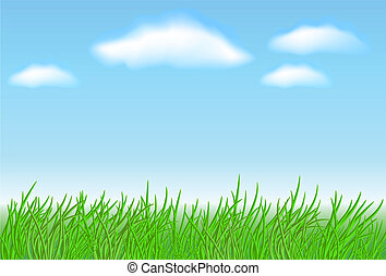 Meadow grass and clouds