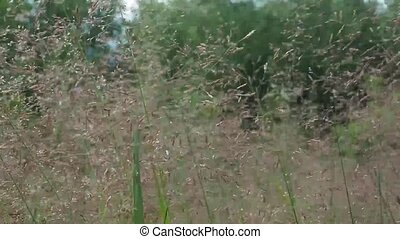 Meadow grass background. Beautiful tall grass moving in the wind