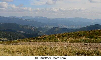 Meadow grass blown by wind in Carpathian Mountains -...