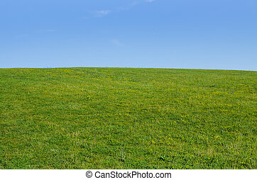 meadow green summer grass with clear blue sky