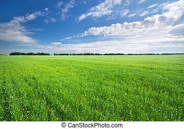 meadow., groene, vlas