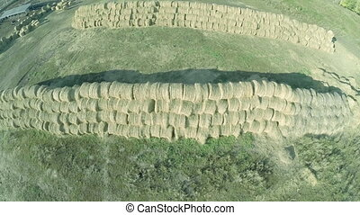 Meadow hay in round bales, farm for animals. Aerial view