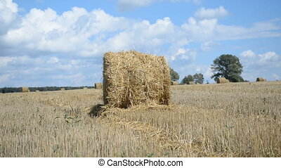 Meadow hay in round bales
