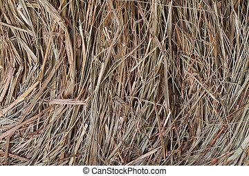 meadow hay texture close up. macro.