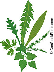 A bouquet of meadow herbs. Isolated vector on white background.