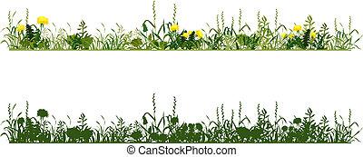 Meadow - Herbs of meadow
