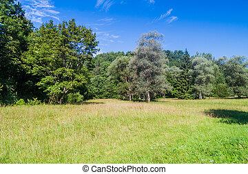 Meadow in Gauja National Park, Latvia