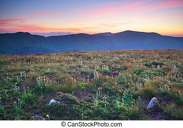 Meadow in mountain.