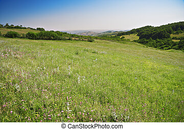 Meadow in mountains