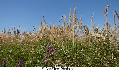 Meadow in summer day
