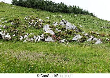Meadow in the Bavarian Alps with stones