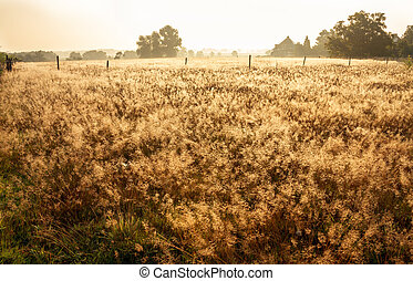 meadow in the dew into a sunny day