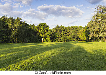 Meadow in the Park on a summer day.