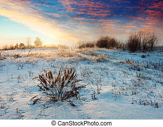 Meadow in winter morning