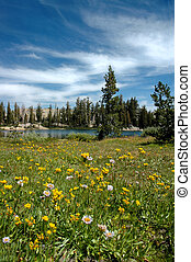 Summer Meadow Wildflowers and Stratus Clouds over Chewing Gum Lake, Stanislaus National Forest, Emigrant Wilderness, Sierra Nevada Range