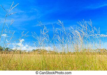 Meadow landscape grassland in phukradueng national park
