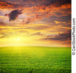 meadow., levers de soleil, grean
