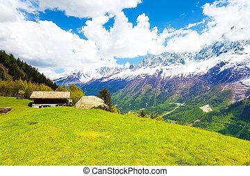 Meadow near Mont Blanc, Alps in summer