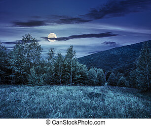 meadow near the forest in mountains at night - meadow with...